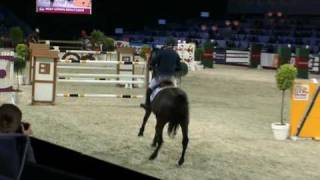 VIDEO: QUINTERO 5* JUMPING STALLION BY QUANTUM. GOLDENGROVE HAVE FRESH SEMEN AVAILABLE FROM QUINEUS