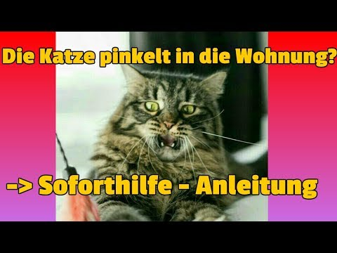 Katze pinkelt in die Wohnung - SOFORTHILFE - Anleitung!