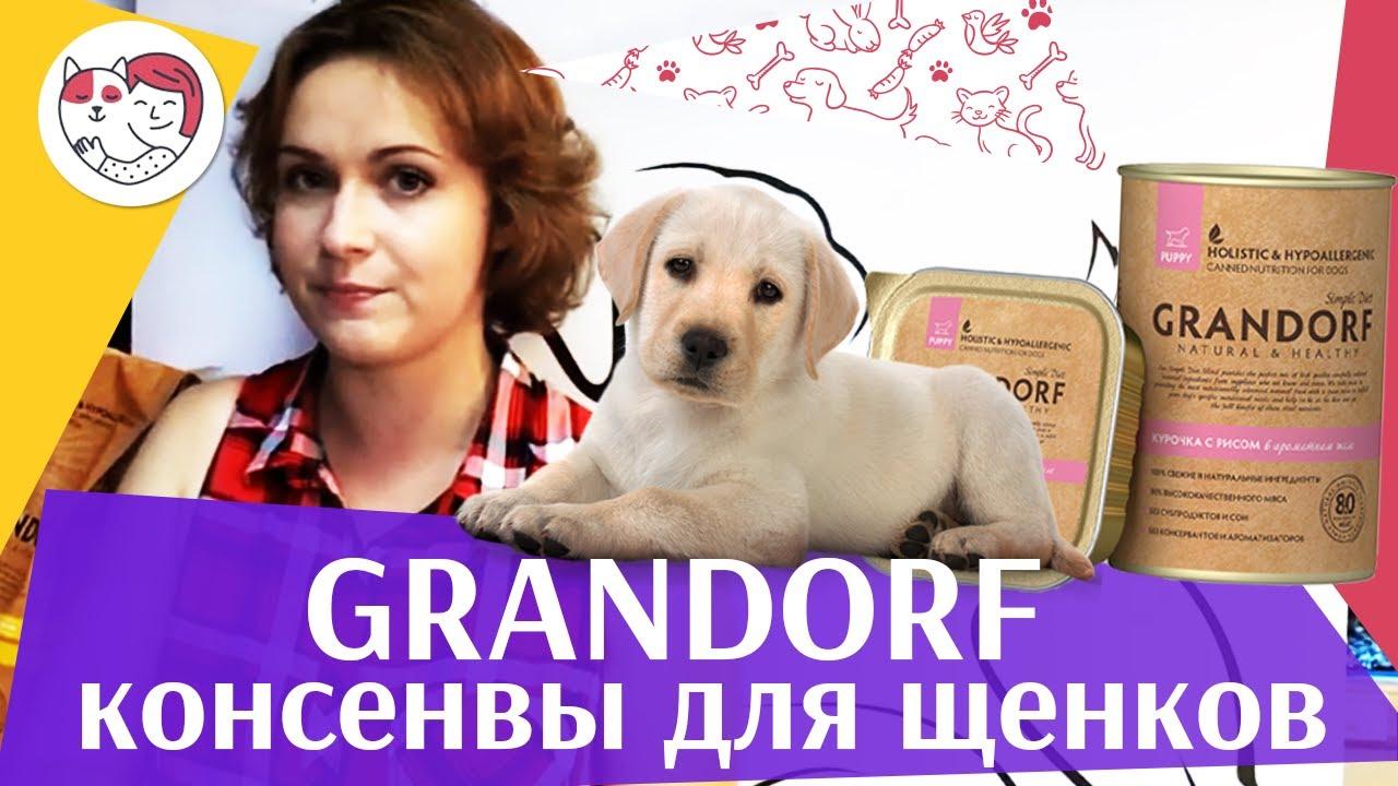 Grandorf консервы для щенков на ilikepet