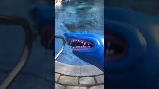 Shark Puppet JR. First video!