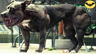 Top 5 Most Dangerous Hybrid Dogs Breeds In The World!
