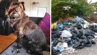 Woman Confused When a Terrier Refuses To Leave A Garbage Heap, Rushes Over