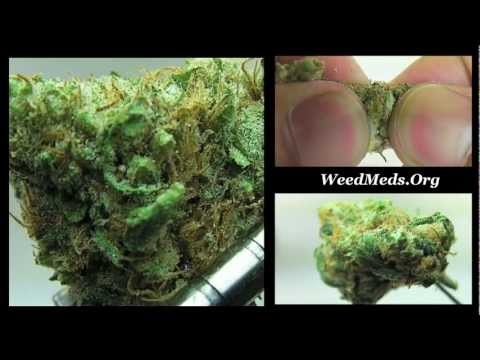 Nuggetry THC Bomb Strain from CPA