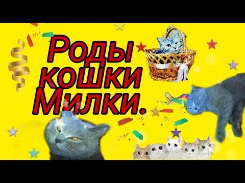 Роды кошки Милки.Счастливая история.