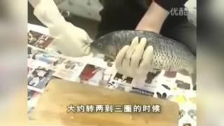 Смотреть онлайн Как вытащить внутренности рыбы без ножа
