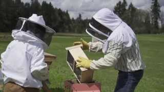 When to Start a Bee Hive