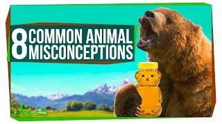 8 Things People Get Wrong About Animals