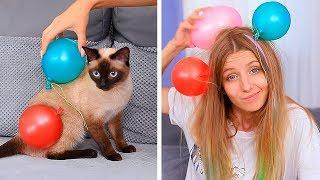 17 Funny Pet Pranks And Hacks
