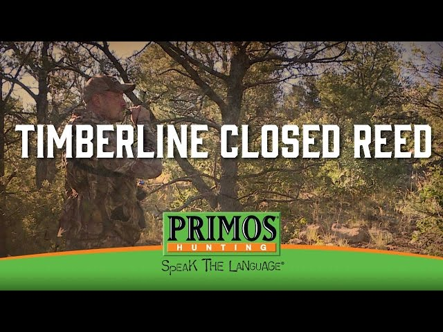 How to Use a Primos Timberline Closed Reed Elk Call