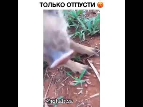 Ржака прикол октября 2018 только отпусти