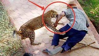 Смотреть онлайн Трагедии в зоопарках с людьми
