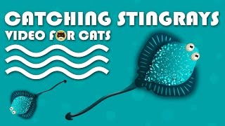 CAT GAMES - Catching Stingrays. FISH VIDEO FOR CATS.