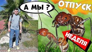 Муравьи неделю без присмотра! Живы или нет? И как убраться в муравьиной ферме.