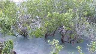 preview picture of video 'High tide at Shimoni, Kenya'