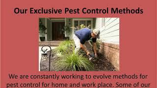 Safest Pest Control Solutions in Melbourne