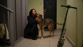 Собака встречает хозяина