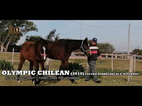 Lote OLYMPIC CHILEAN (USA)