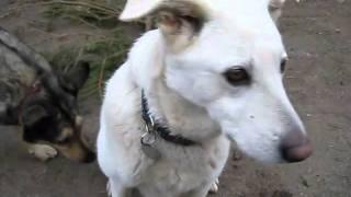 preview picture of video 'Der zehnjährige Luca aus dem Tierheim Filderstadt sucht ein Zuhause'