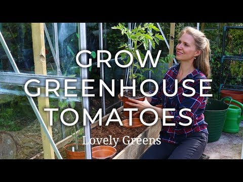 , title : 'How to grow Greenhouse Tomatoes