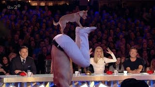 Britain's Got More Talent 2017 Christian Stoinev & Percy the Acrobatic Dog from AGT Full Clip S11E