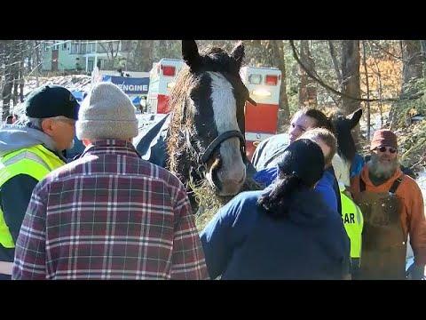 العرب اليوم - شاهد: إنقاذ حصانين من بحيرة متجمدة في بنسلفانيا