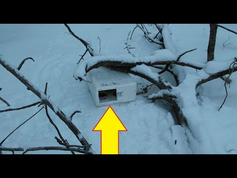This Guy Found A Mysterious Box In The Snow  Nothing Could Have Prepared Him For What Was In It
