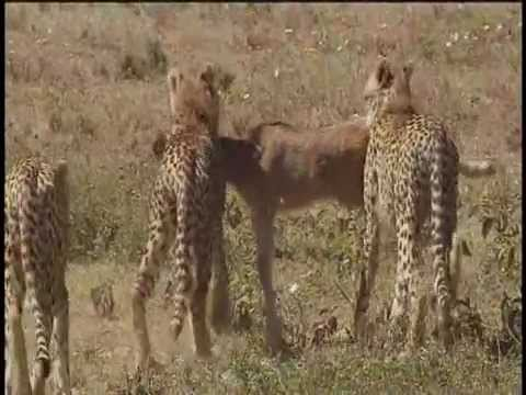 Serengeti National Park, Tanzania - Part 2