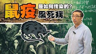 鼠疫是如何传染的?黑死病从未远离人类!