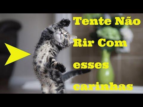Ces e gatos engraados tente no rir   animais engraados #02