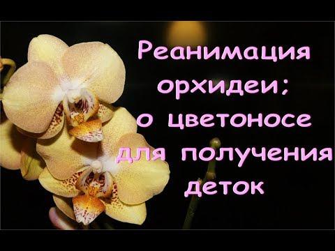 РЕАНИМАЦИЯ орхидеи:УСПЕХ,но НАДОЕЛО.