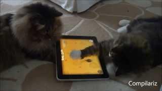 Планшетные животные. Животные играют на планшетах