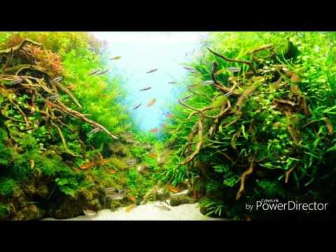 Топ 10 Лучшие и оригинальные аквариумы мира