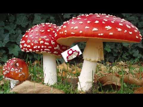 Tutti i generi di un fungo di piede di una fotografia