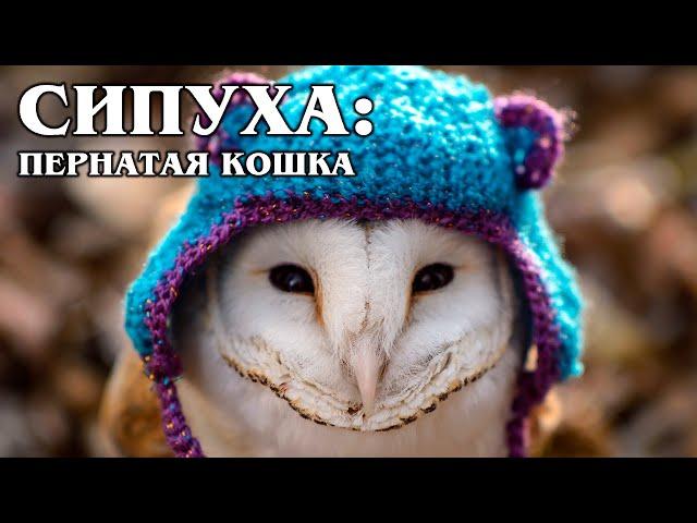 Video Aussprache von Tyto alba in Englisch