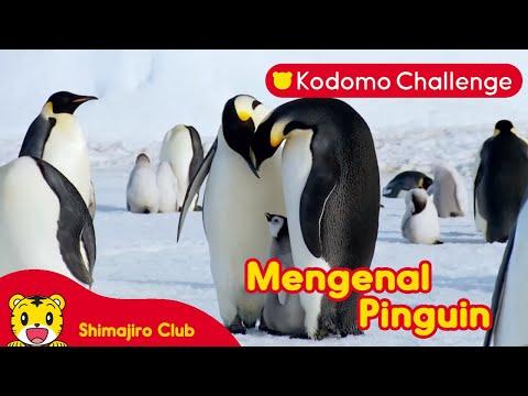 Mengenal Pinguin