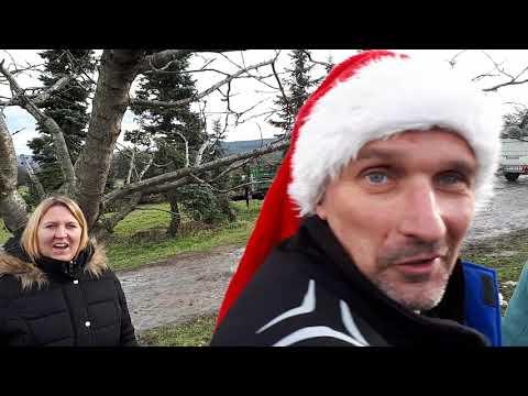 Rudolf mit roter Nase kauft Weihnachtsbaum