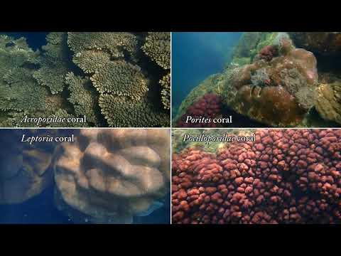 永安珊瑚生態影片2分鐘 英文版