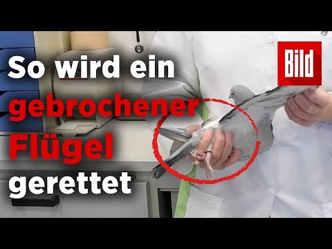 Die Analysen auf ljamblii in sankt peterburge
