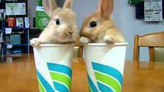 2 Rabbits Two Cups