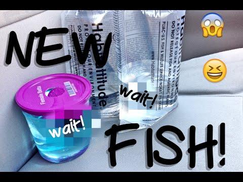 New Betta Fish And Guppies!
