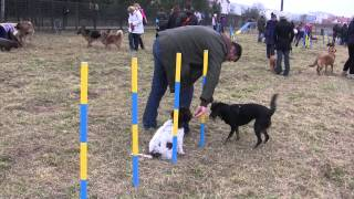 Open day in dog school, 09.2014