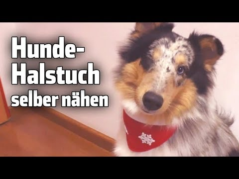 DIY: Hundehalstuch selber nähen