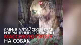 Живодеры изрезали собаку