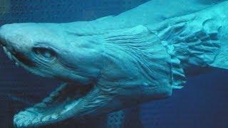 5 САМЫХ ЖУТКИХ ТВАРЕЙ В ОКЕАНЕ / Документальный discovery