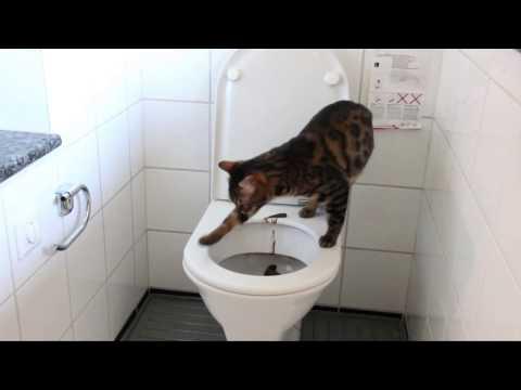 Toilet trained Cats (Almost) Katzen gehen auf Toilette (Draco und Tiger Business)