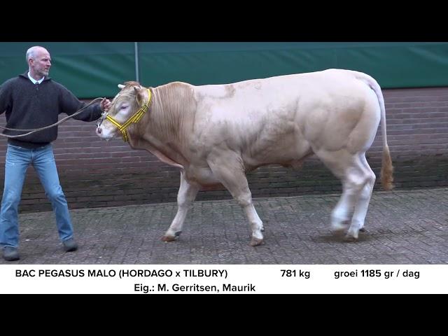 BAC Pegasus Malo NL682791577