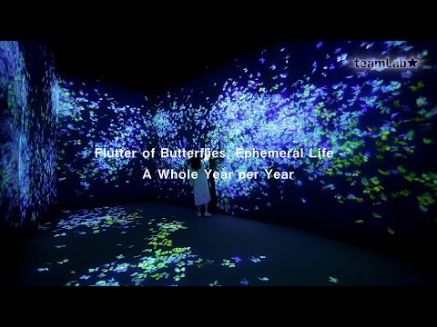 Flutter of Butterflies, Ephemeral Life - A Whole Year per Year