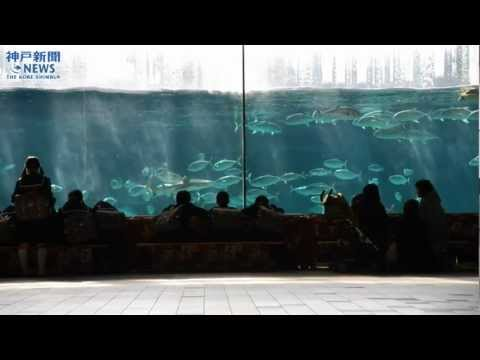 こたつで観賞 須磨海浜水族園