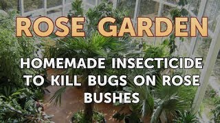 Homemade Insecticide to Kill Bugs on Rose Bushes