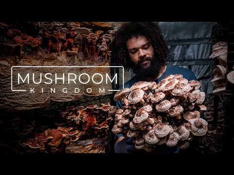 Meet the Man Cultivating Gourmet and Medicinal Mushrooms